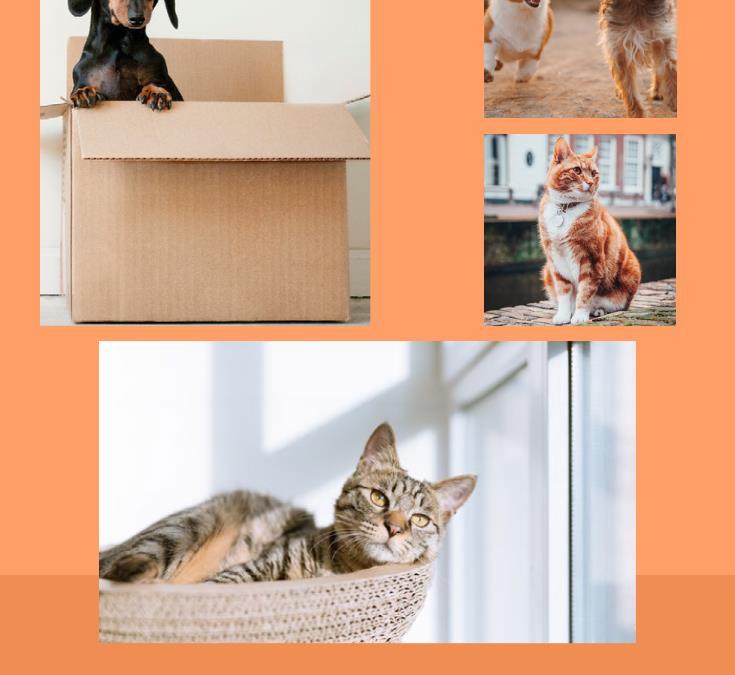 Ways to Save on Pet Ownership